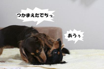 2008 07 29 チョロお預かり日記 blog05のコピー
