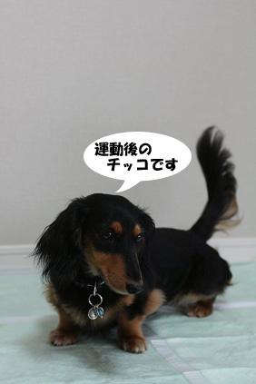2008 07 29 チョロお預かり日記 blog08のコピー
