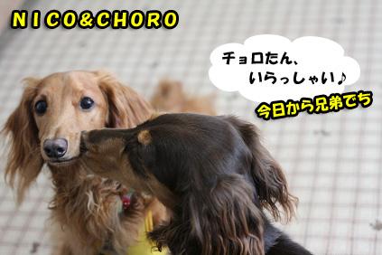 2008 07 29 チョロお預かり日記 blog17のコピー