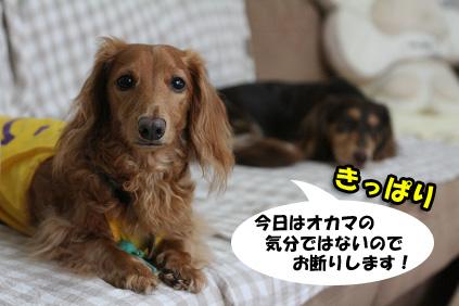 2008 07 29 チョロお預かり日記 blog15のコピー