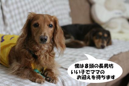 2008 07 29 チョロお預かり日記 blog16のコピー