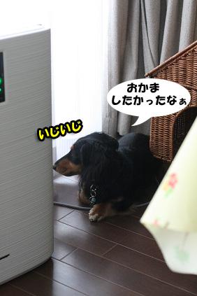 2008 07 29 チョロお預かり日記 blog19のコピー