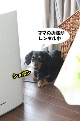 2008 07 29 チョロお預かり日記 blog20のコピー