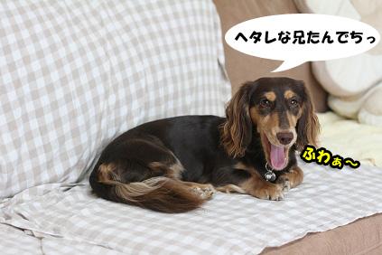 2008 07 29 チョロお預かり日記 blog14のコピー