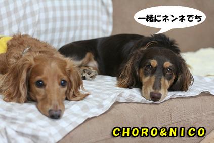 2008 07 29 チョロお預かり日記 blog22のコピー