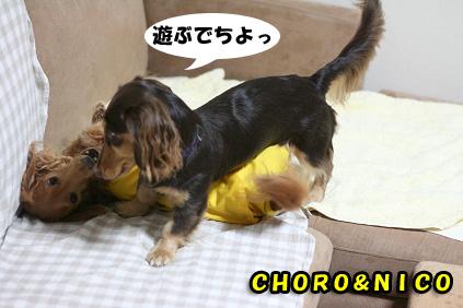 2008 07 29 チョロ君お預かり日記その2 blog07のコピー