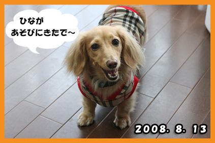 2008 08 13 ひな&あやめ blog02のコピー