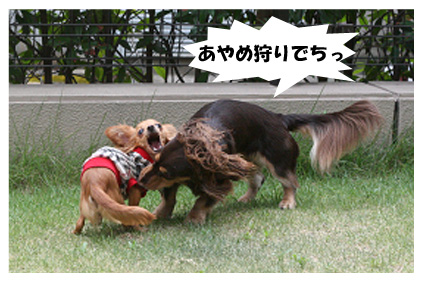 2008 08 13 ひな&あやめ blog07のコピー