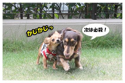 2008 08 13 ひな&あやめ blog14のコピー