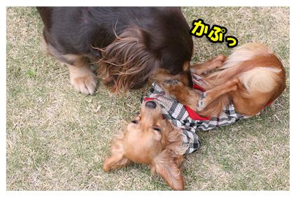 2008 08 13 ひな&あやめ blog05のコピー