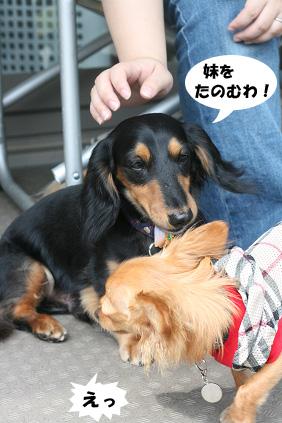 2008 08 13 ひな&あやめ blog10のコピー
