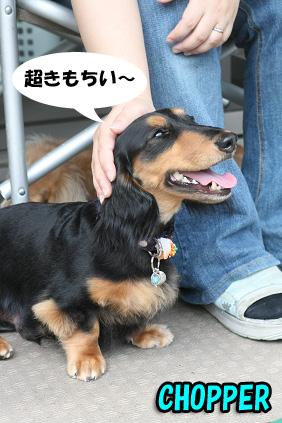 2008 08 13 ひな&あやめ blog11のコピー