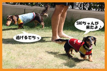 2008 08 15 プール遊び blog01のコピー