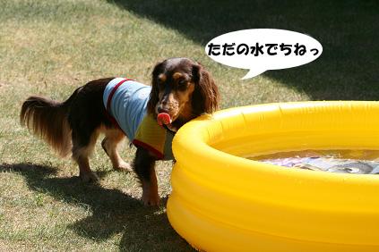 2008 08 15 プール遊び blog12のコピー