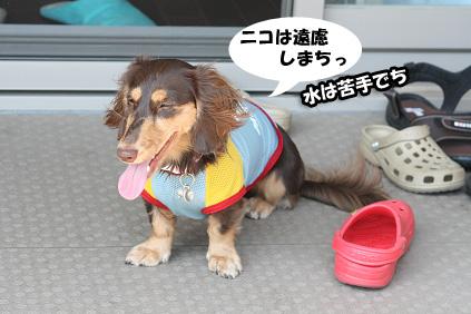 2008 08 15 プール遊び blog03のコピー