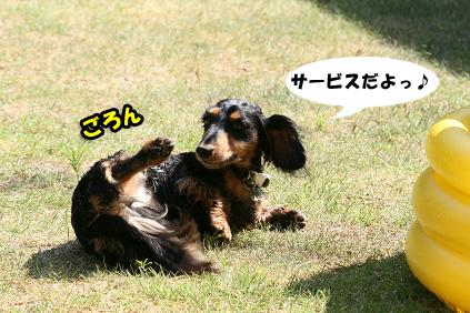 2008 08 15 プール遊び blog10のコピー