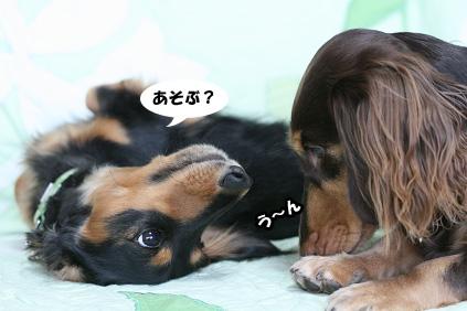 2008 08 17 お家で撮影2 blog10のコピー