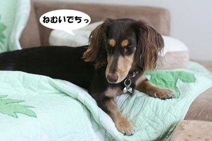 2008 08 17 お家で撮影2 blog11のコピー