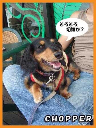 2008 08 24 胎動動画&ホームズ blog03のコピー