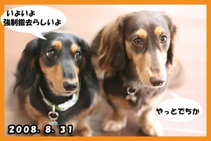 2008 08 17 お家で撮影 blog10