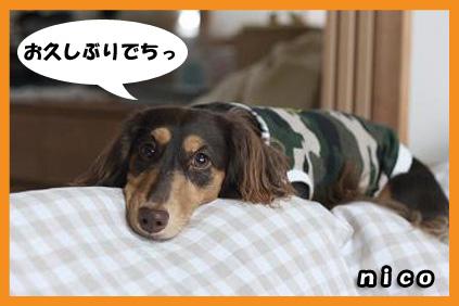 2008 09 13 モモと犬 blog01のコピー