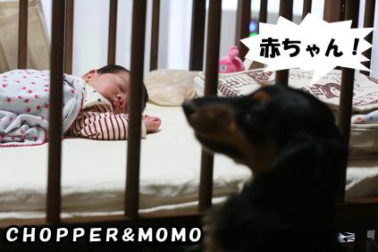 2008 09 13 モモと犬 blog02のコピー
