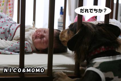 2008 09 14 モモと犬 blog04のコピー