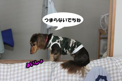 2008 09 13 モモと犬 blog03のコピー