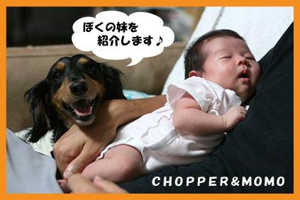 2008 09 20 モモ blog01のコピー