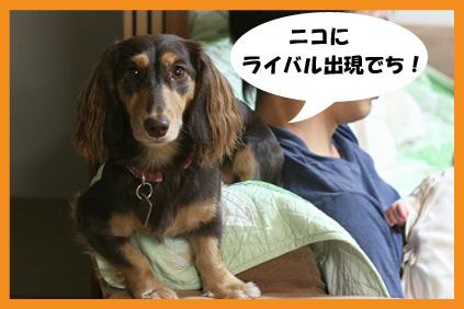 2008 09 26 ニコとモモ2 blog02のコピー
