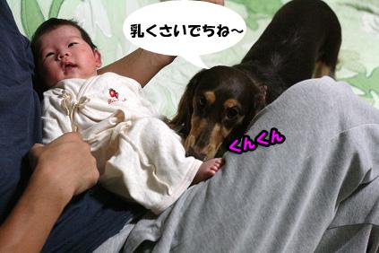2008 09 26 ニコとモモ blog01のコピー