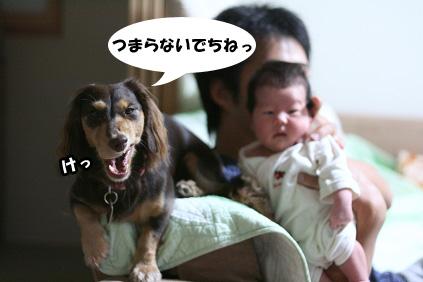 2008 09 26 ニコとモモ blog03のコピー
