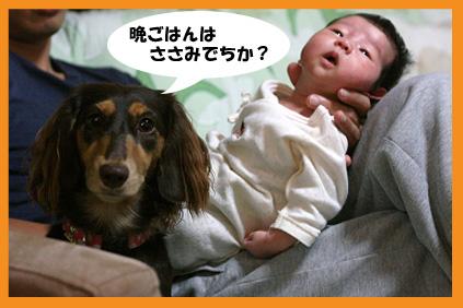 2008 09 26 ニコとモモ2 blog04のコピー