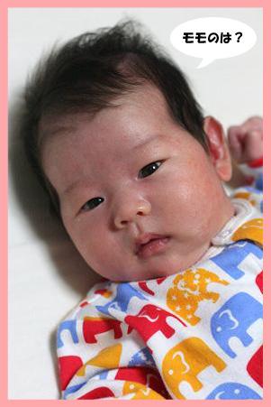2008 09 30 百香一か月 blog03のコピー