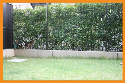2008 10 17 モモカリハーサル3 blog01のコピー