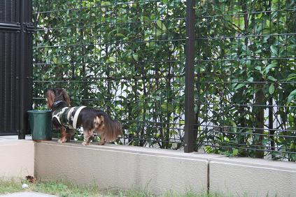 2008 10 17 モモカリハーサル3 blog04