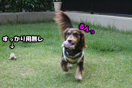 2008 10 17 モモカリハーサル2 blog04のコピー