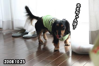 2008 10 25 おかえりチョッパー2 blog04のコピー