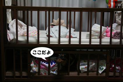 2008 10 25 おかえりチョッパー2 blog02のコピー