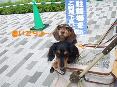 blog070813nanba06.jpg