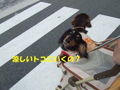 blog070813nanba07.jpg