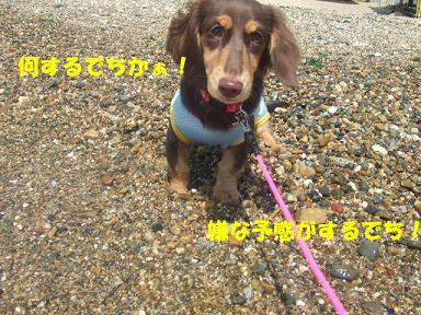 blog070817umi11.jpg