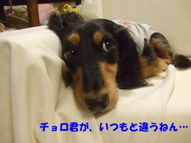 blog070822choro03.jpg