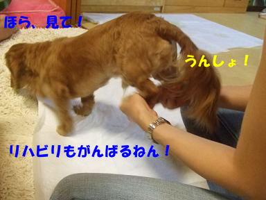 blog070822choro06.jpg