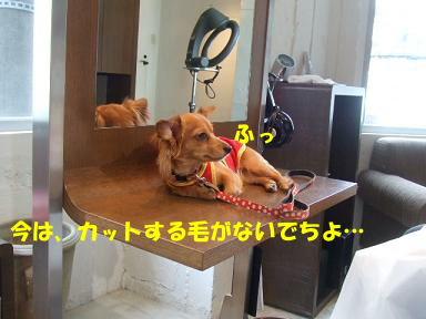 blog070828book01.jpg