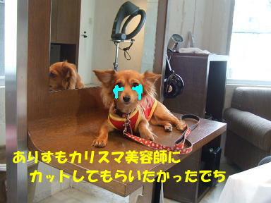 blog070828book02.jpg