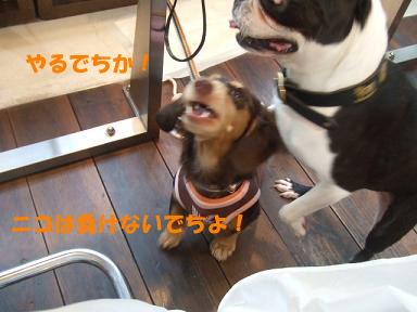 blog070828book04.jpg