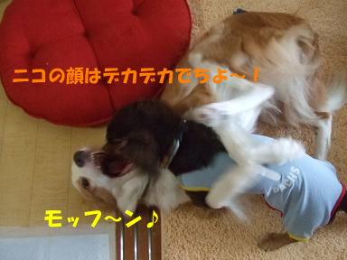 blog070902choro02.jpg