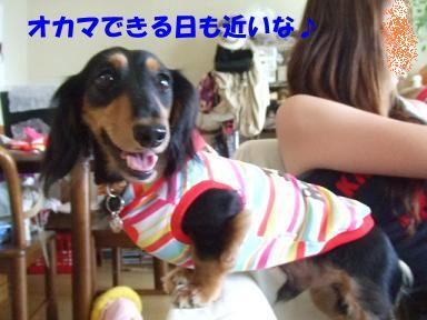 blog070902choro03.jpg