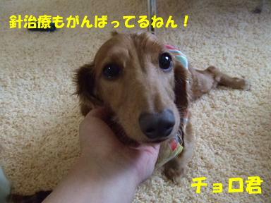 blog070902choro06.jpg